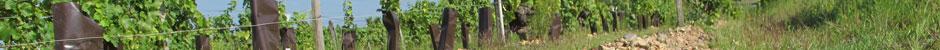 Vignerons de Loire