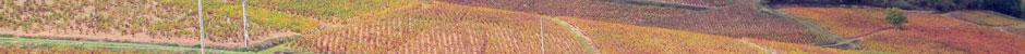 Vignerons du Beaujolais